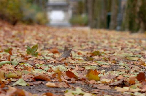 Un mardi à la faveur de l'automne