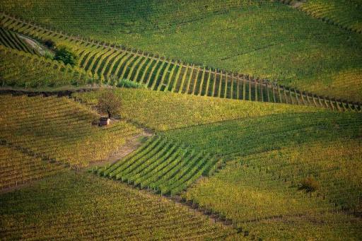 La production mondiale de vin en baisse de 10% en 2019