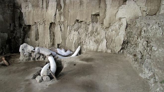 L'Homme a-t-il fait disparaître les mammouths? La découverte d'ossements sème le doute sur les techniques utilisées