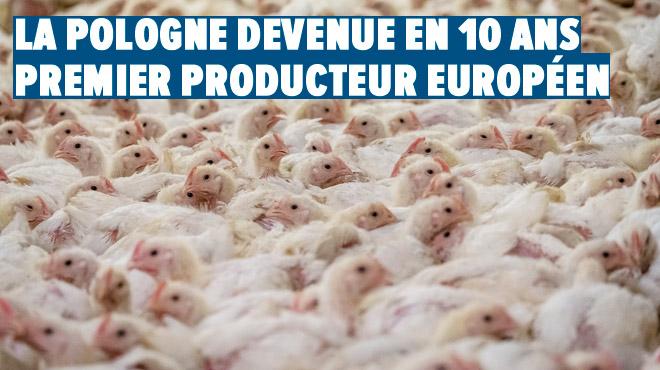 La Pologne, milliardaire en poulets: dans un seul abattoir géant, 750.000 volailles tuées chaque jour