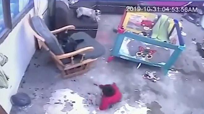 Un chat sauve de justesse un bébé qui allait tomber dans un escalier