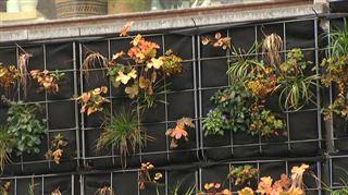 Ça se passe en Belgique- une façade recouverte de plantes pour filtrer et réutiliser les eaux usées 4