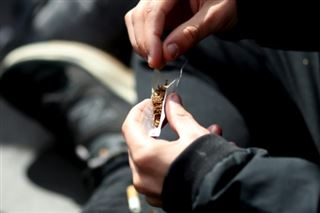 Pour les dealeurs, la légalisation du cannabis, ça serait galère