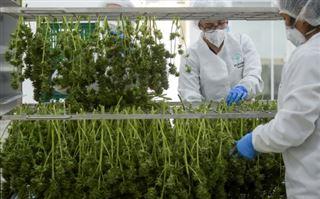 Au salon de l'agriculture, le cannabis thérapeutique aiguise les appétits