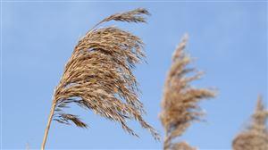 Prévisions météo pour ce week-end: le vent toujours aussi piquant?