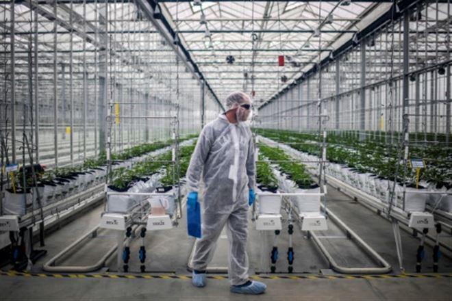Canada- ventes en hausse mais faillites en vue dans le secteur du cannabis