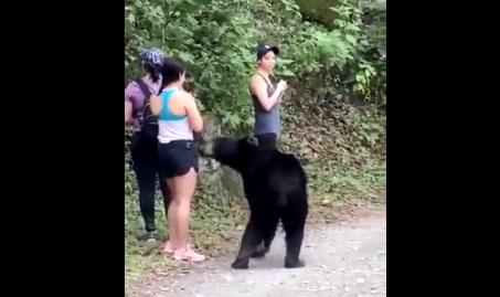 Ces randonneuses tombent nez à nez avec un ours noir (vidéo)