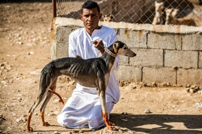 Dans la Syrie en guerre, l'élevage de lévriers pour la course et la chasse