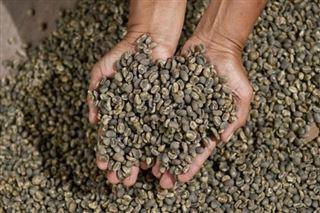 Les géants du café doivent prouver qu'ils respectent les droits humains et l'environnement
