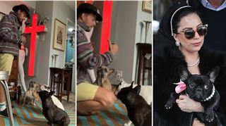 Le promeneur de chiens de Lady Gaga violemment attaqué- comment va-t-il?