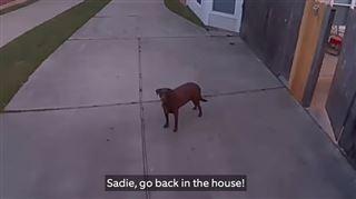 Pratique- alors qu'il est au travail, un maître ordonne à son chien de rentrer à la maison (vidéo)
