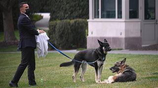 Major et Champ, les chiens de Joe Biden, de retour à la Maison Blanche un mois après un incident de morsure (photos)