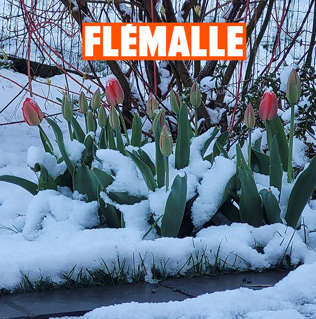 630-flemalle