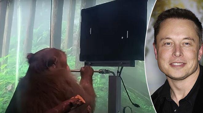 Un singe joue à un jeu vidéo grâce à son cerveau, la nouvelle fierté d'Elon Musk (vidéo)