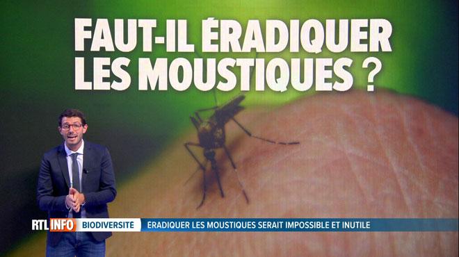 Le moustique est l'animal le plus MEURTRIER de la planète: faut-il l'éradiquer?
