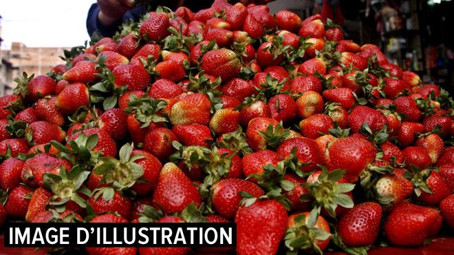 """Deux laboratoires dignes de """"Breaking Bad"""" découverts dans une fraiseraie en Flandre"""