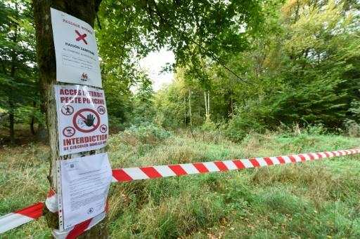 """Peste porcine: création d'une """"zone blanche"""" vide de sangliers à la frontière de la Belgique"""