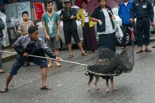 En Birmanie, des prières bouddhistes pour apaiser les chiens des rues