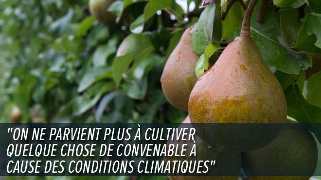 """Les producteurs de poires et de pommes de plus en plus impactés par le changement climatique: """"On voit bien que le temps change"""""""