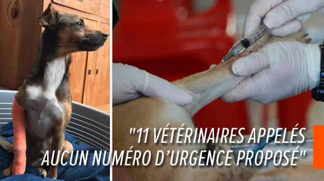 Y a-t-il un problème de garde vétérinaire en Wallonie? Amalia a galéré pour trouver un docteur pour son chien blessé